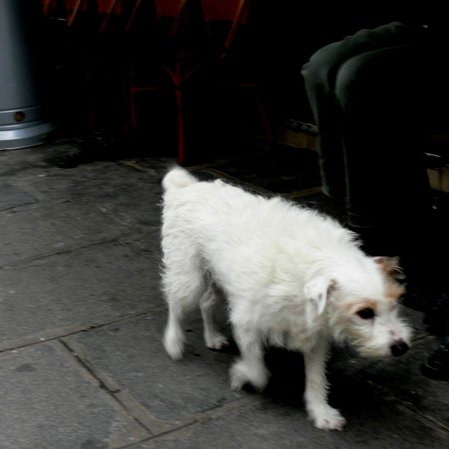 Side Walk Mutt, Paris